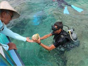 4.24 沖縄県海洋水産研究センターと協働で、産卵が可能な大型個体6個を設置